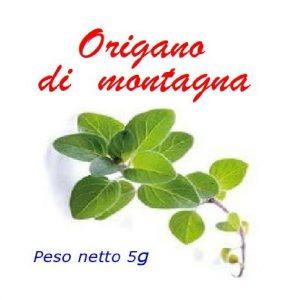 Origano