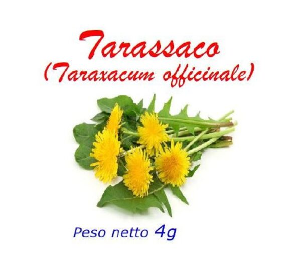 Tarassaco_fronte